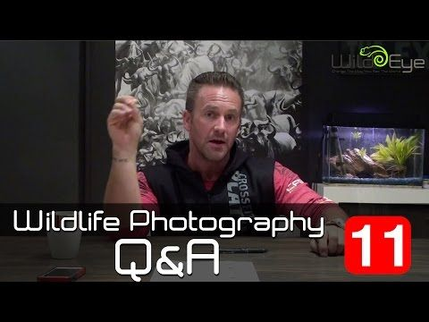 Wildlife Photography Q&A: Episode 11