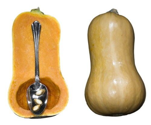 Squash Seeds- HONEYNUT - Mini Butternut Squash - UNTREATED SEED - 10 Seeds #theseedhouse