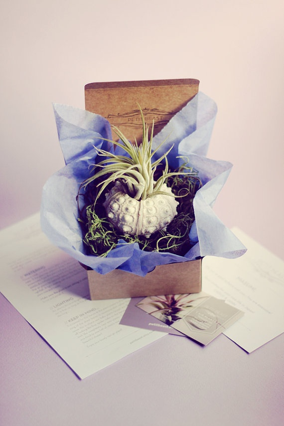 Plant-O-Gram and Vessel // Surprise Air Plants Sent to Anyone plant delivery.. i would love this gift