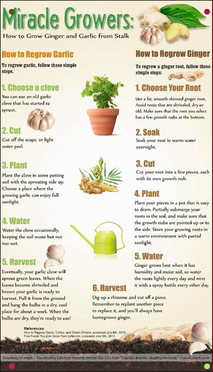 How To Regrow Garlic And Ginger From The Stalk Infographic In 2020 Growing Ginger Growing Vegetables Fall Garden Vegetables
