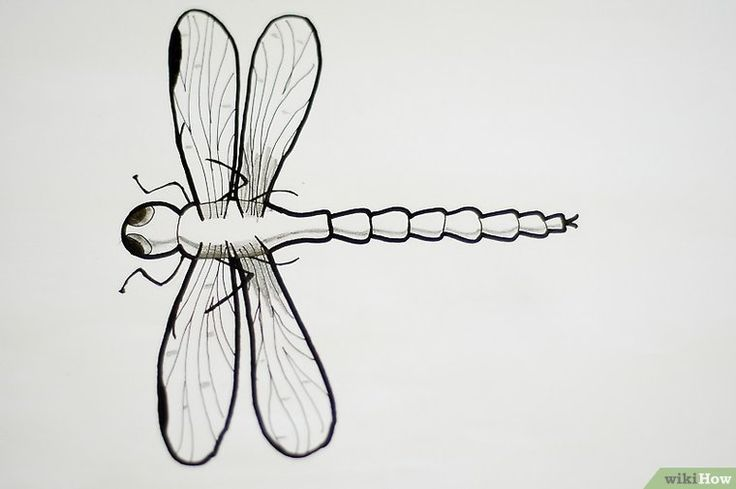 Draw a realistic dragonfly fly drawing flower line