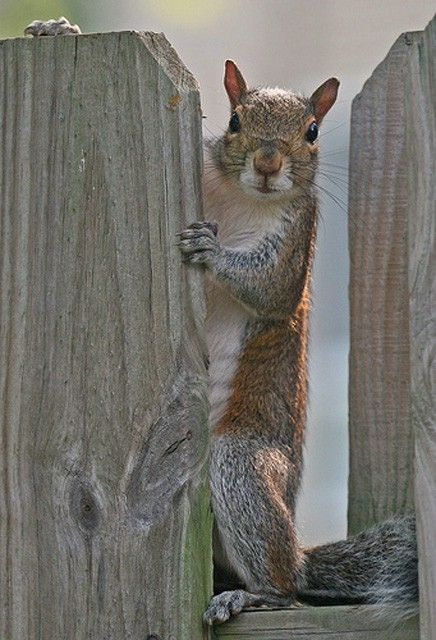 how to get rid of squirrels in bird feeders