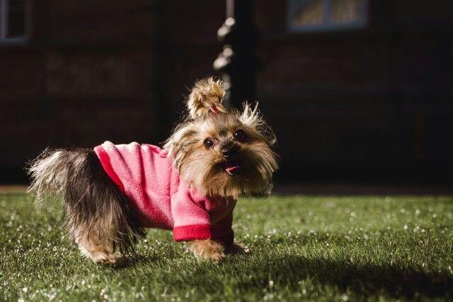 www.urbecom.com/puppy
