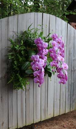 Orchids Garden Design find this pin and more on projects to try Find This Pin And More On Orchid Display Ideas