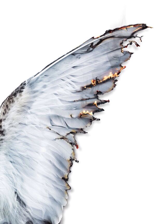 """She looked upon the burning wings. Her knees buckled underneath her, sending her softly into the snow. How the flames flickered and fluttered off the tips of the feathers. """"He's gone,"""" she whispered; her pale pink fingertips smoothing out the wrinkles and smothering the flames."""