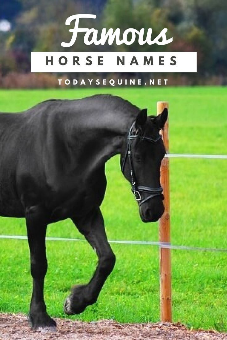 Y Horse Names 25+ best ideas about H...
