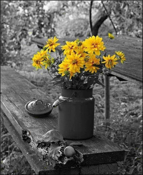 colorsplash.quenalbertini: Yellow splash | Ana Rosa