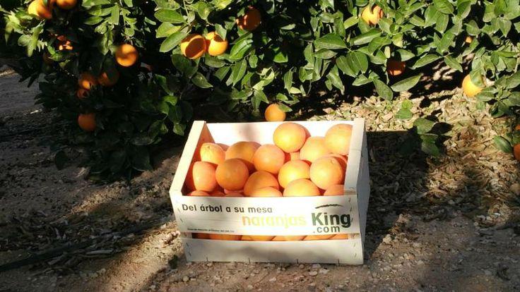 Caja de Naranjas recién cortadas del árbol para www.NaranjasKing.com