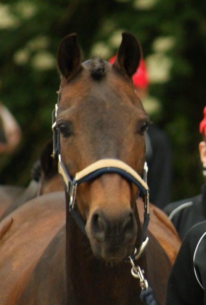 Bekijk onze paarden en pony's en leer ze beter kennen. Of kom een keertje langs op Manege Hillegersberg aan de rand van Rotterdam en bekijk ze in het echt.