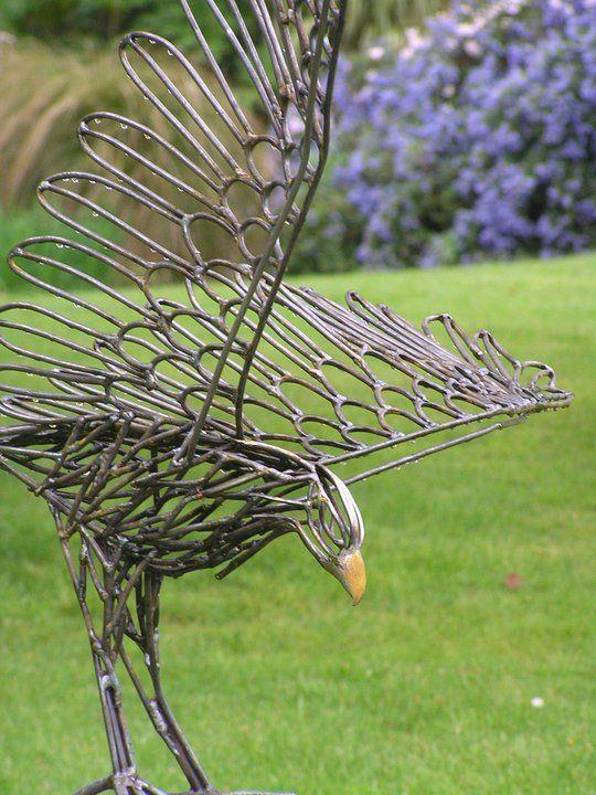 Australasian Harrier Hawk steel sculpture by Sharon Earl. 2010.