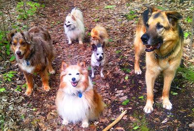 DIY Natural, Herbal, Homeopathic Dewormers for Dogs and Cats