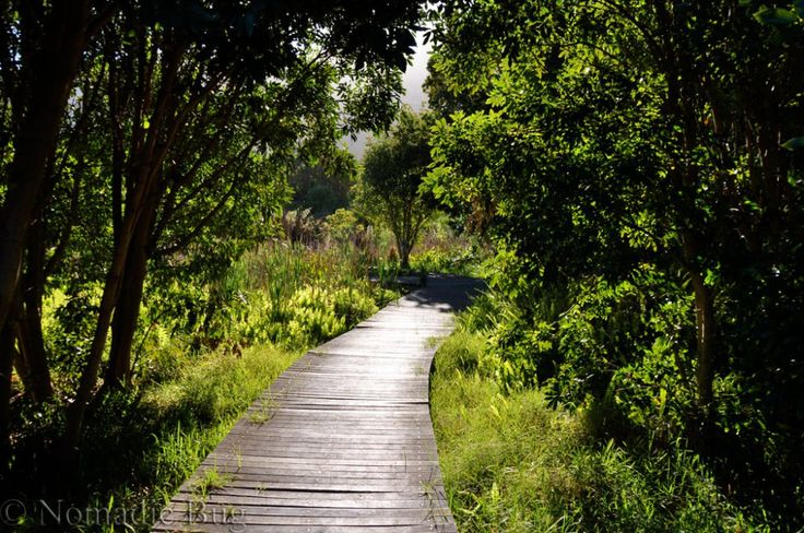 Lost in the gardens, Kirstenbosch Gardens, Cape Town, South Africa     Fun Things To Do In Cape Town This Summer Nomadic Existence