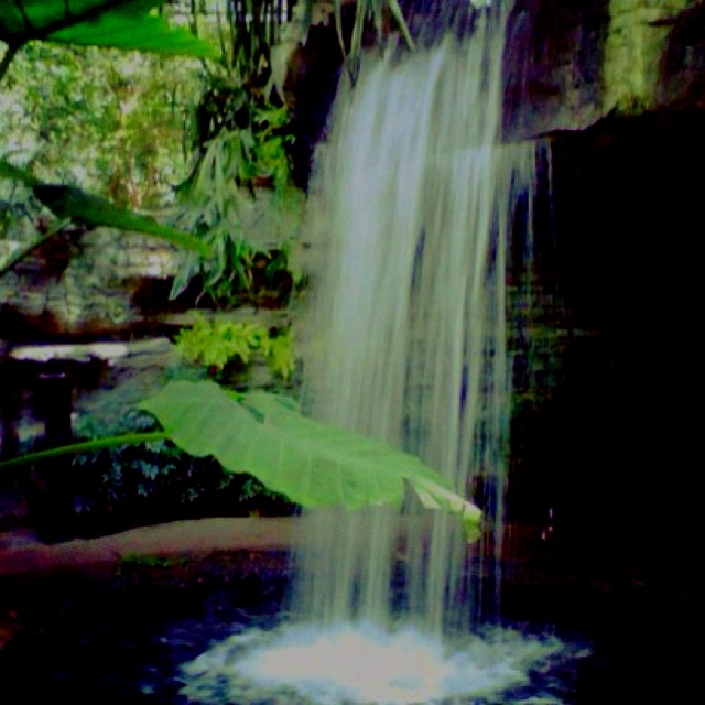 100+ Best Images About Opryland Hotel On Pinterest