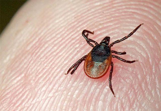 Чем опасны укусы жалящих насекомых и животных - Мое Настроение - социальная сеть для тех кому хорошо