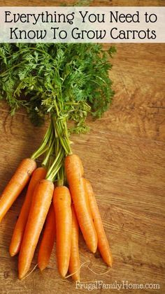 Growing carrots in the garden doesn't have to be hard. This gardening guide is everything you'll need to know for how to grow carrots in your own garden. You can start them from seed, grown them in raised beds or in containers. You just need the right soi