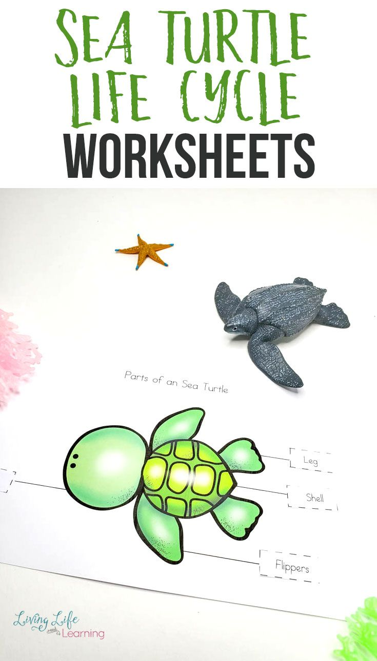 Sea Turtle Life Cycle Worksheets For Kids Turtle Life Cycle Sea Turtle Life Cycle Turtle Life [ 1290 x 735 Pixel ]