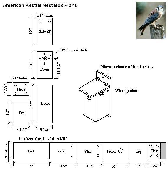 American Kestrel Nest Box Plans For The Irds Pinterest