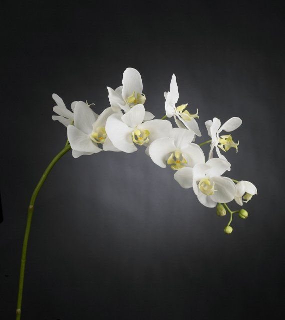 VG NEW TREND Orchidej