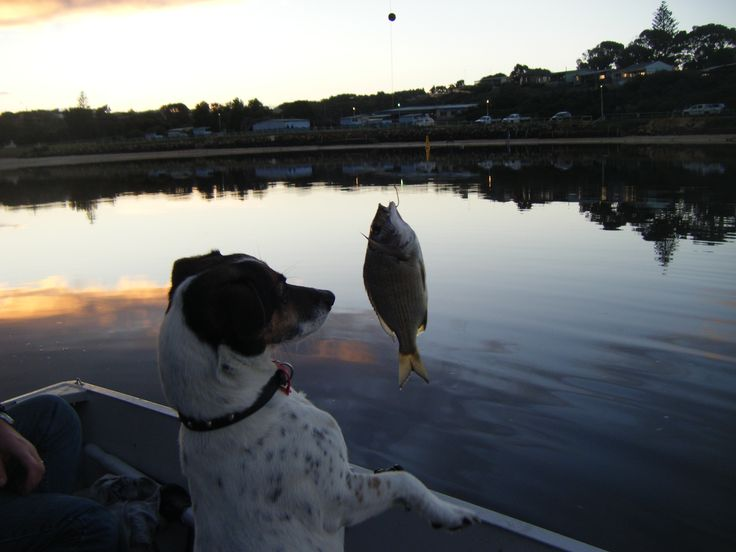 Toby loves to fish!  #Moore River to the# Indian Ocean at #Guilderton Western Australia... home of our 'shack'.