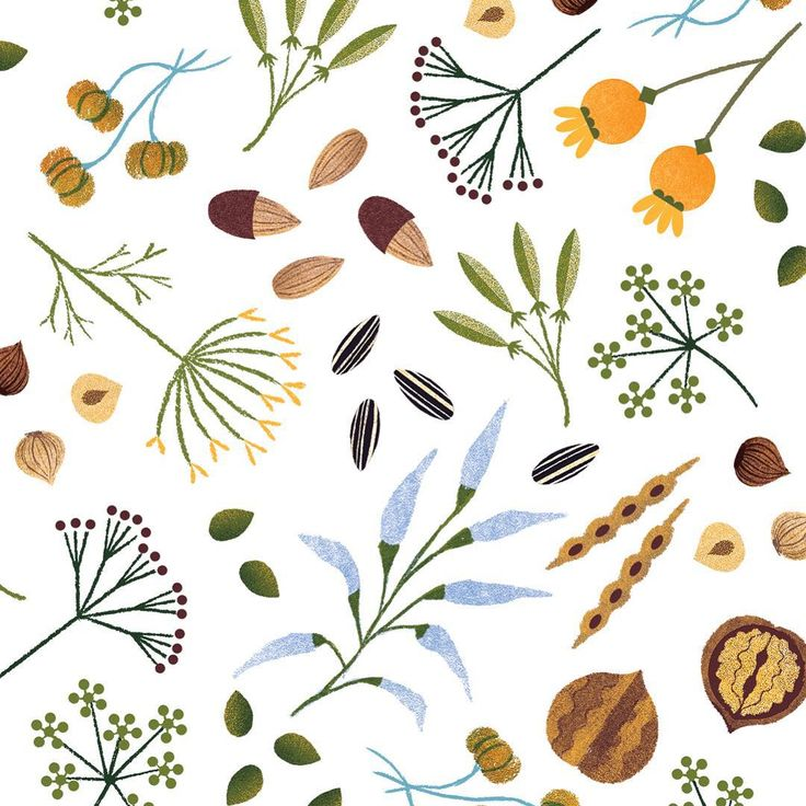 seeds, nuts, autumn, illustration, design, print, pattern, watercolour, drawing, flowers, nature