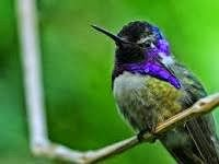Algoritma Hummingbird Google Mulai Terasa Dampaknya