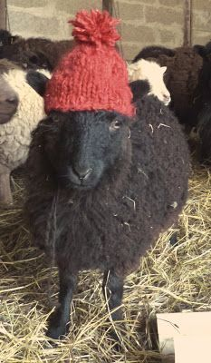 The Spinning Shepherd § La Bergère Filandière.....every sheep should have a hand knit hat!!!