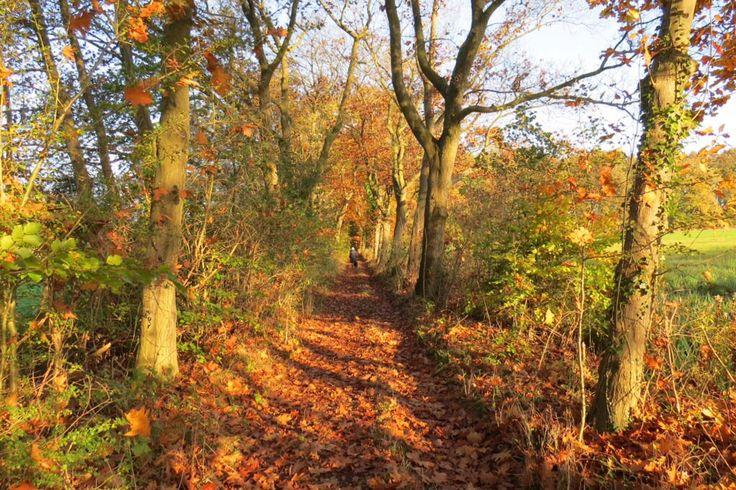 2014-11-02 Mooi wandelpad naae landgoed Boxbergen bij Boskamp