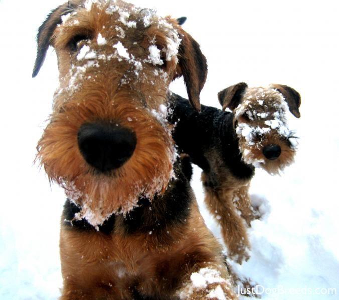 snow pups!