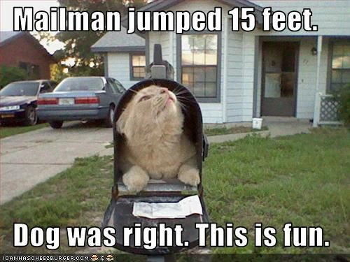 mailcat: Funny Kitty, Funny Pictures, Funny Cat, Cat Mems, Crazy Cat, Mail Boxes, Mailbox, Silly Cat, Cat Memes