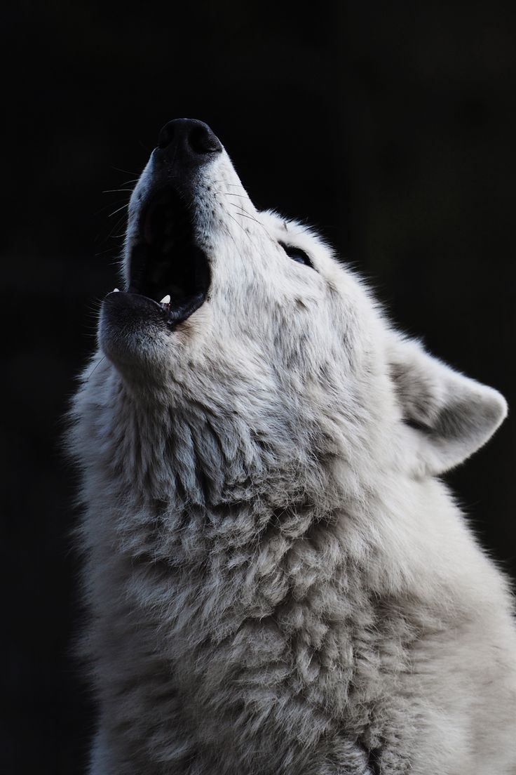 Howling at the Moon by Edwin Butter.