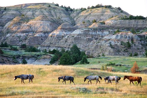 Theodore Roosevelt National Park, North Dakota | USA