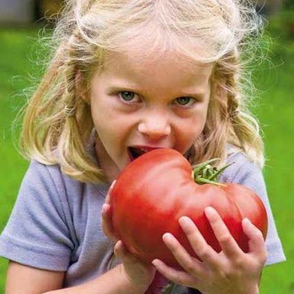 Rosiile contin un antioxidant numit licopen. Acesta aduce o mulțime de beneficii pentru sănătate, dintre care unul este protejarea pielii împotriva daunelor provocate de soare. Printr-un mic studiu efectuat de cercetatorii de la Universitatile din Manchester si Newcastle s-a descoperit ca oamenii care au consumat zilnic 55g de pasta de tomate au avut cu 33 % mai multa protectie impotriva arsurilor solare.