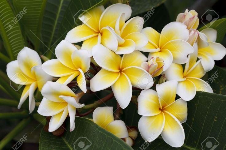 Afbeeldingsresultaat voor tropische bloemen