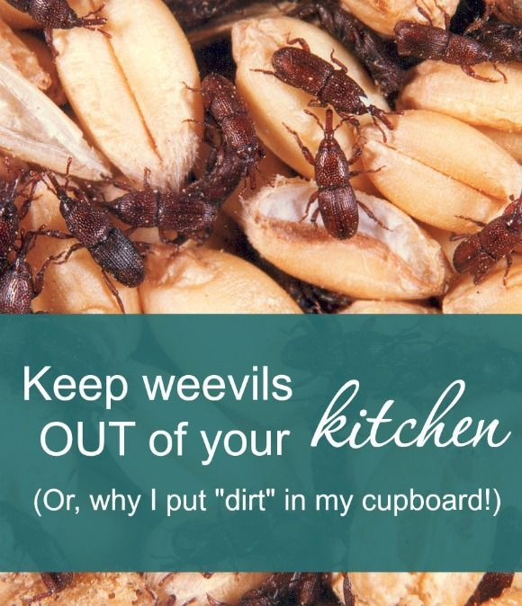 Little Black Bugs On Kitchen Counter: 17 Best Images About Kitchen Ideas On Pinterest
