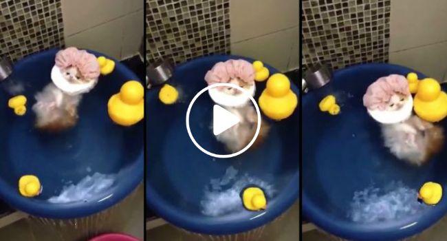 Depois De Um Dia Cansativo, Gato Decide Relaxar Em Banho De Imersão