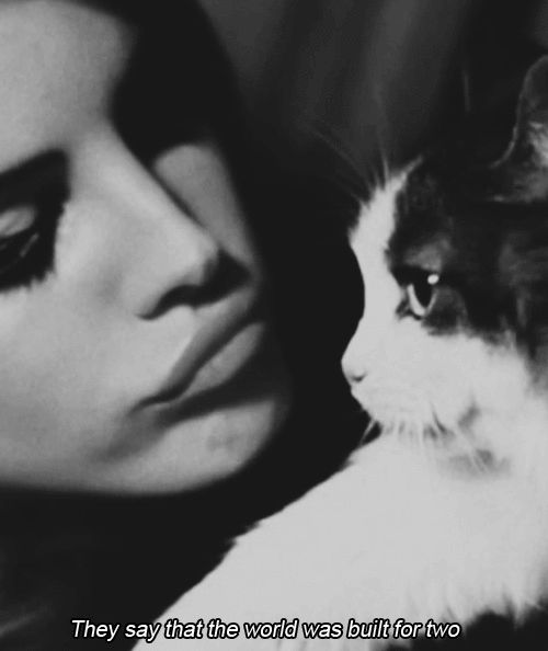 Just me and a cat, please.