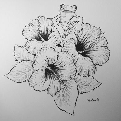hibiscus flower drawing - Google Search