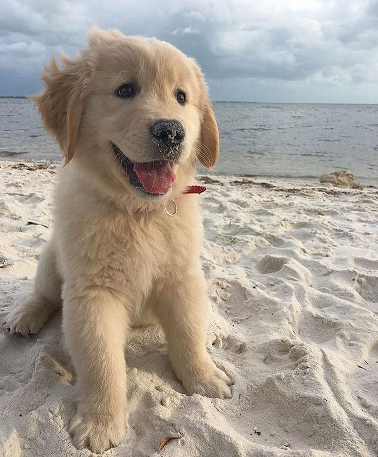 17 Best Images About Pet Friendly Flooring On Pinterest: 17 Best Images About Beach Living On Pinterest