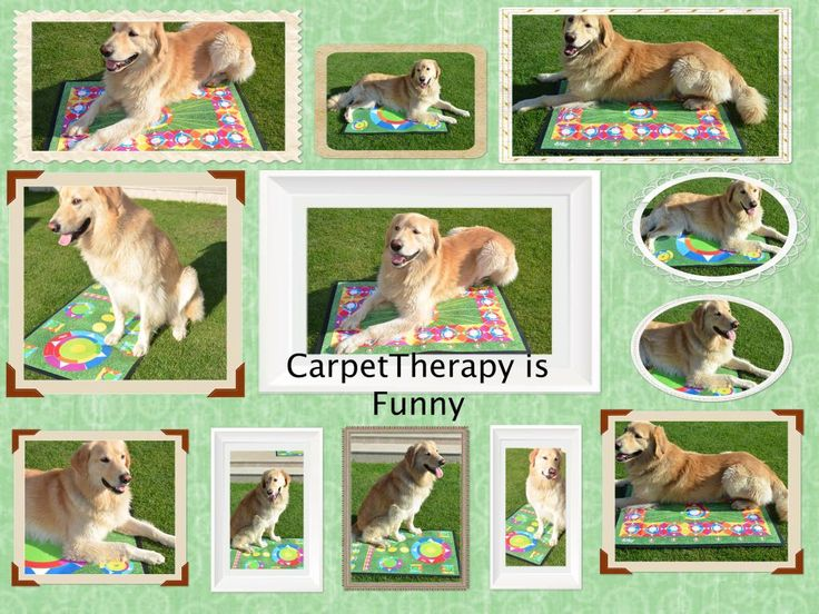 http://www.49lley.com/c/carpet-therapy/?view_style=grid&view_count=18&view_sort=age… #carpetTherapy #pets #dogs #cats #horses #horsesoftwitter