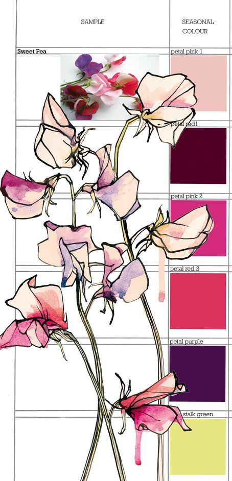 Planet Sam: Colour from the Season - Sweet Pea garden