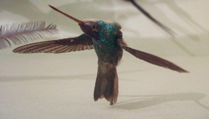 Mejores 75 imágenes de aves en Pinterest | Pájaros bonitos ...