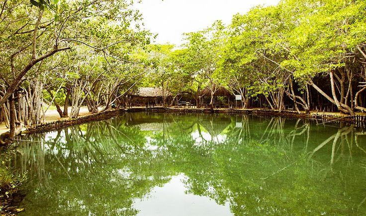 Reserva Ecológica El Corchito, Yucatán, México