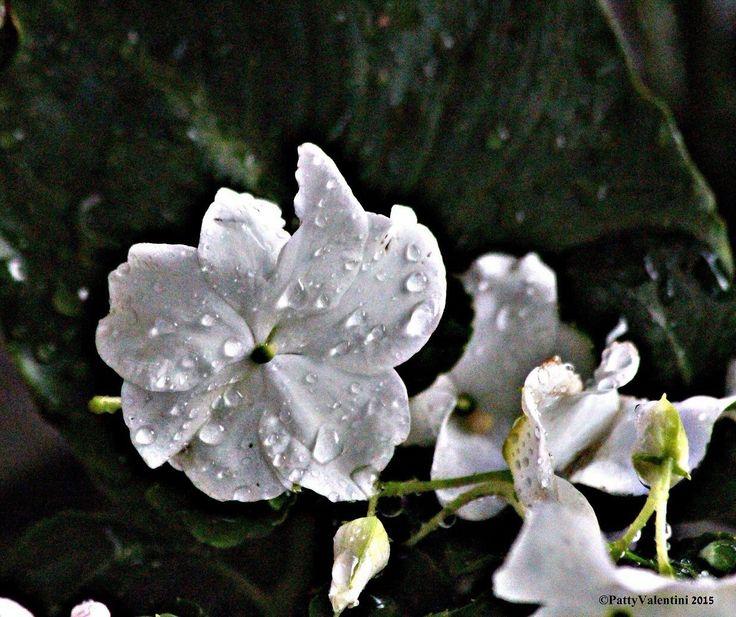 I fiori di Giada