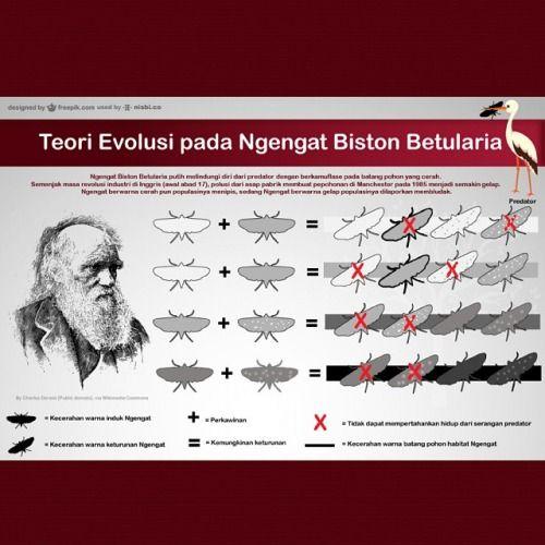 teori evolusi pada ngengat bistoon betularia putih