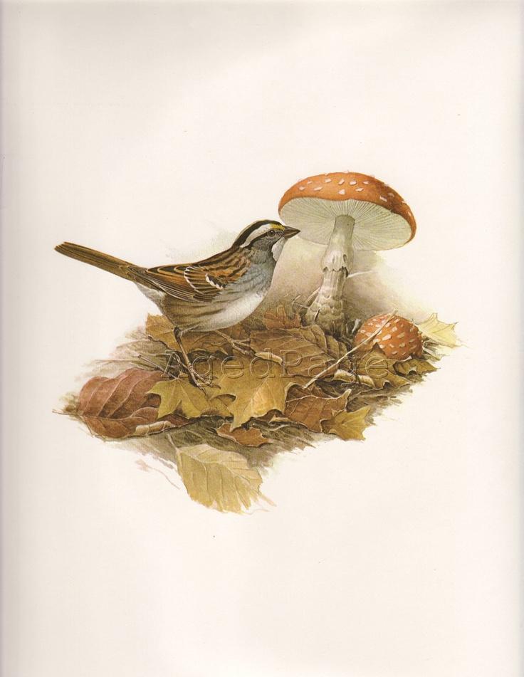 Vintage Bird Print, Book Plate Art Illustration, Wall Hanging Decor, Ornithology, White-Throated Sparrow. $10,00, via Etsy.