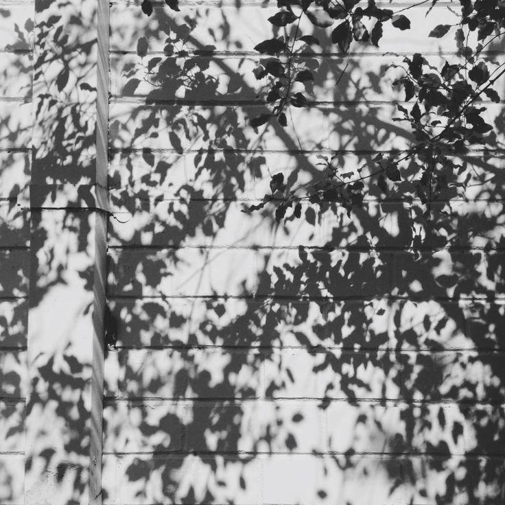 #shadow #leaves #spring #vscocam #photograph #blackandwhite  jinjing-deng.vsco.co