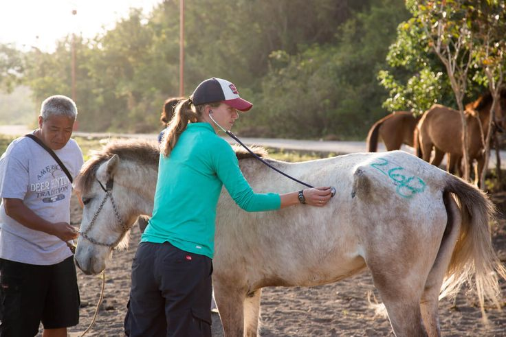 Thanks to PETA Asia and International Veterinary Outreach, overworked horses on Taal Volcano are receiving health care for the first time.