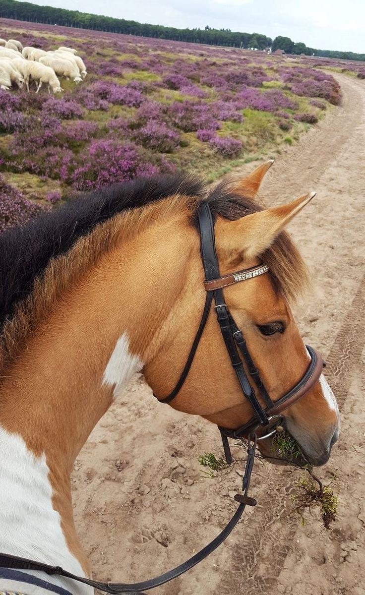 pferd | Tier | Haustier | – #Haustier #Pferd #Tier