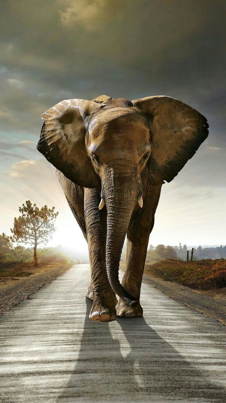 STUNNING BEAUTIFUL ELEPHANT! Elephant, Elephant