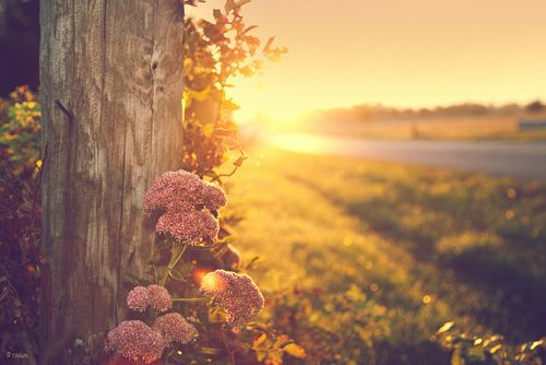 sunrise and pink flowers: The Roads, Beautiful Mornings, Country Roads, Trav'Lin Lights, Mondays Mornings, Too Late, Taylors Swift, Fall Photo, Golden Hour